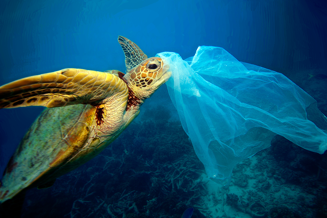 Turtle trying to eat plastic