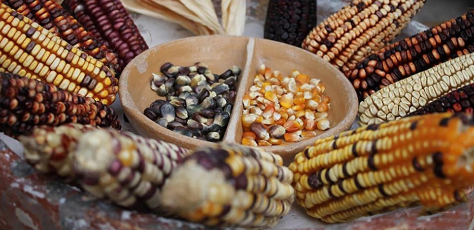 Varieties of seeds